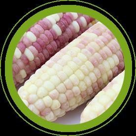 速冻玉米批发来自温度和冷冻的时间的长短