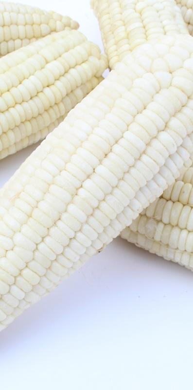 上海白玉米
